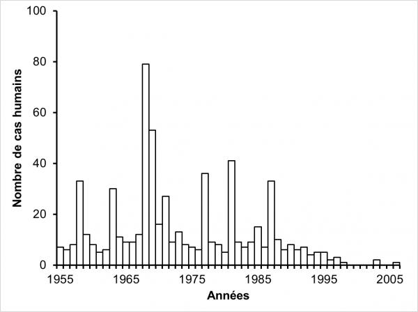 enterobiasis epidemiológia kerekférgek emberi paraziták
