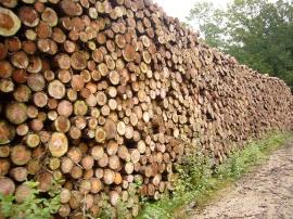 bois en Limousin