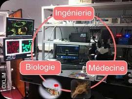 De l'ingénierie à la médecine bioélectronique
