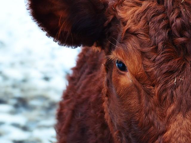 L'Université de Limoges propose un nouveau diplôme en droit animalier !