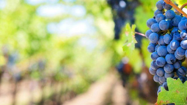 Couleur du vin | Les travaux de Patrick Trouillas distingués dans une prestigieuse revue