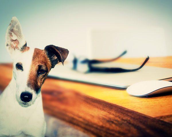 Intégrez le DU droit animalier